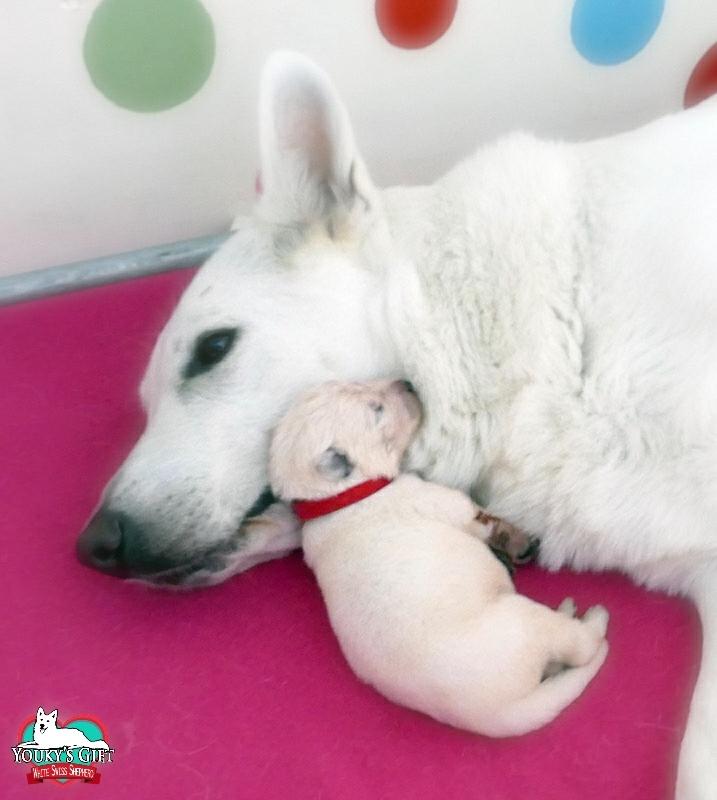 cucciolata G: 2 settimane 14a