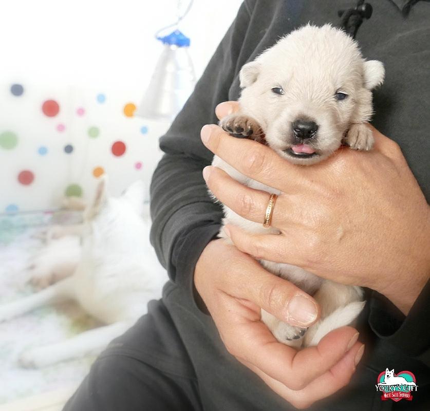 cucciolata G: 2 settimane prima zampicure