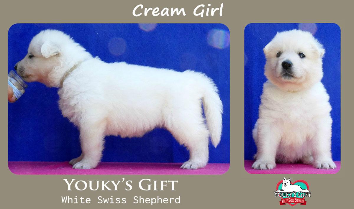 cucciolo pastore svizzero cream girl