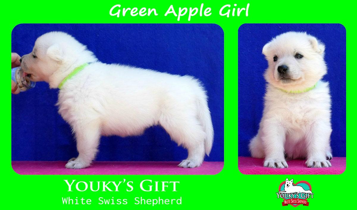 cucciolo pastore svizzero green apple girl