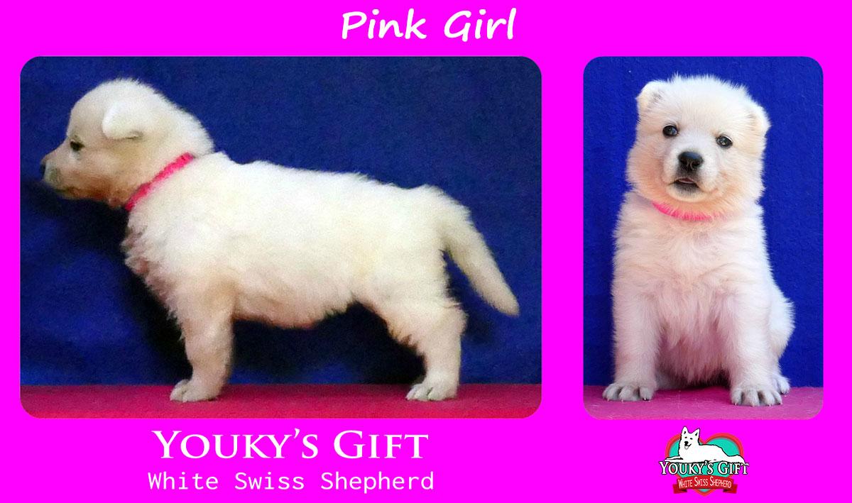 cucciolo pastore svizzero pink girl