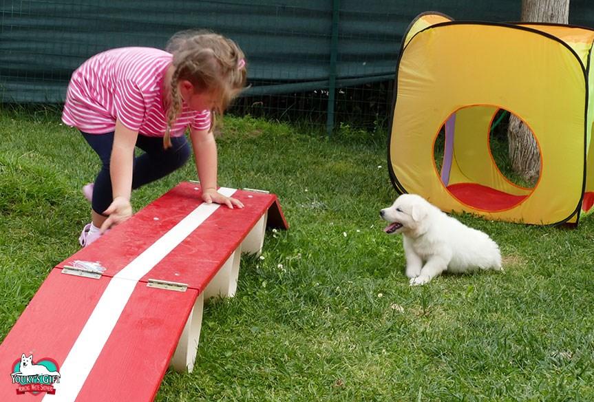 carattere cuccioli cucciolata G pastore svizzero 2