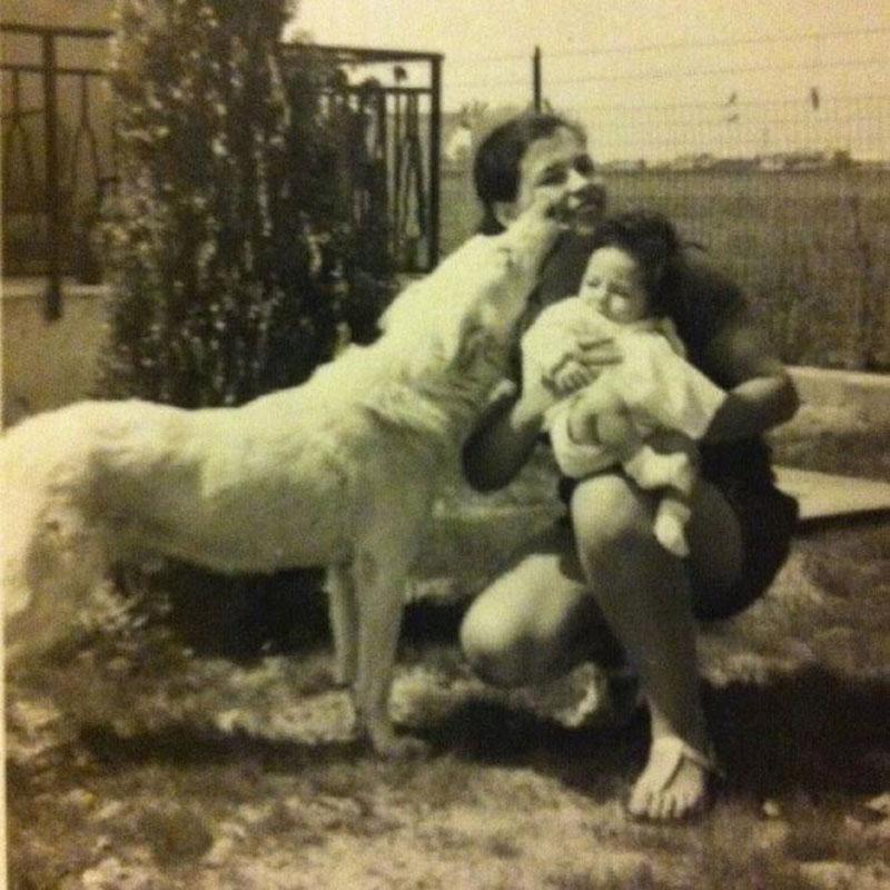 1971-web cuccioli pastore svizzero Youky's Gift