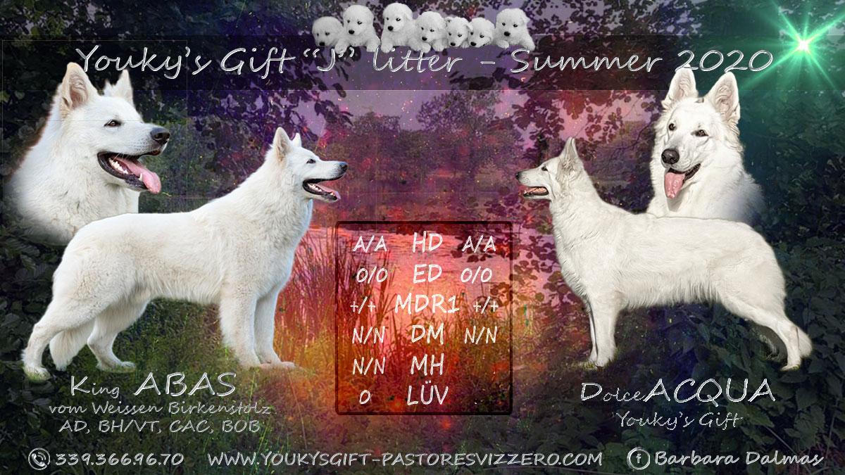 litter-J-acqua-abas- cuccioli pastore svizzero Youky's Gift